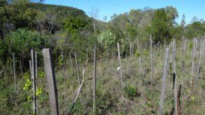 Execução de plantio em área degradada.